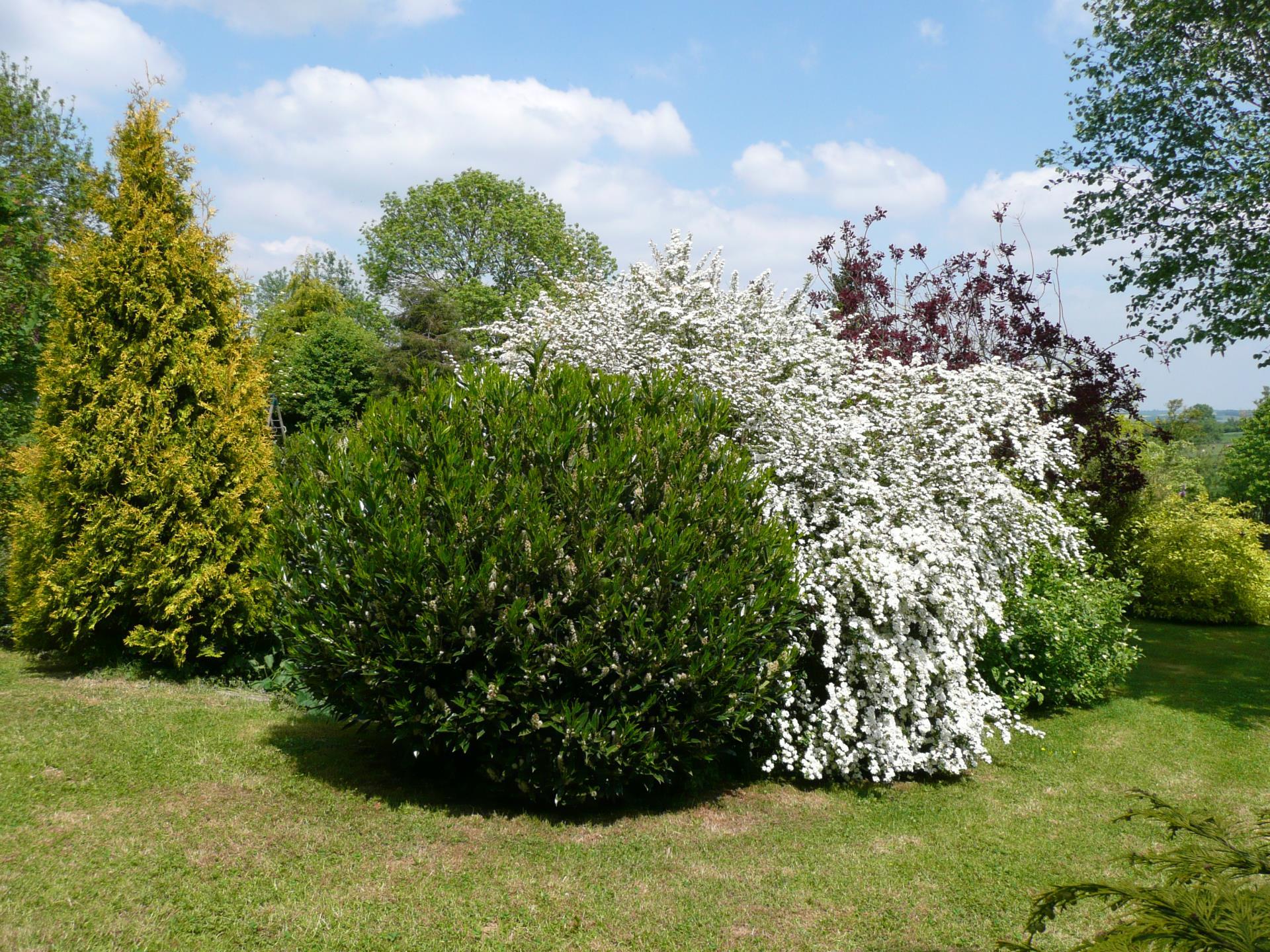 Un espace emménagé pour les arbustes de jardin